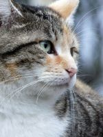 The cemetery cat 2 by Guilllaume
