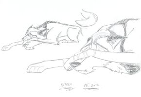 Kitara the wolfhound - sketches. 11 by MortenEng21