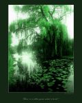 There is a willow grows by welder