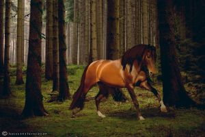 Nameless by Horse101Luver2010