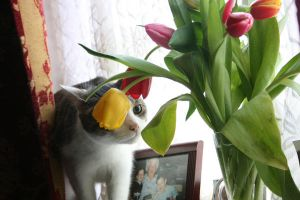 alfie with flowers by thom-cat