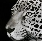 The Jaguar( Panthera onca) finished by Anbeads