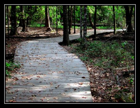 The Trail by carepa
