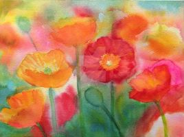 Poppies by karincharlotte