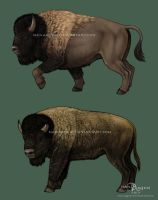 Buffalos by makangeni