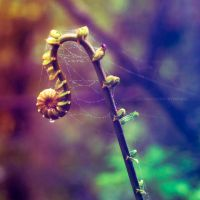 incy wincy spider x incognitophotoworks by holamiamor