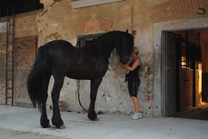 Friesian stock by Fealwen