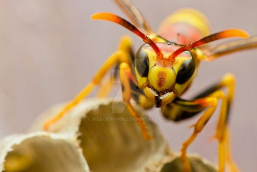 Apache Wasp by ribbonworm