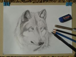 Wolf Portrait by patbunNF