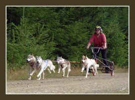 Puppies in Training by Volklet