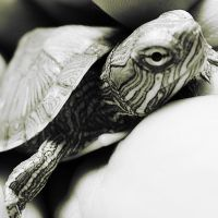 The Turtle by Aime-Rue