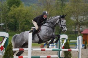 Grey Horse - Show Jumping Stock 8.20 by MagicLecktra