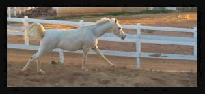 WannaBe A RaceHorse by GirlOnPaintHorse