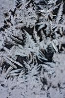 Last Frost of 2012 II by thriftyredhead