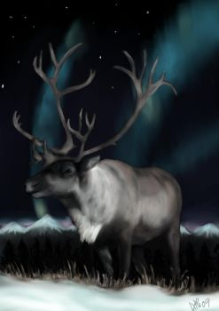 Reindeer of the northern light by aldana07