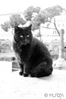 Black Cat by BaurMurza