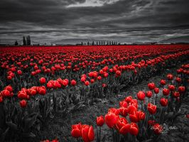 Red Rows by StephGabler