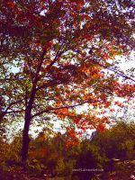 Colours of Autumn by since91