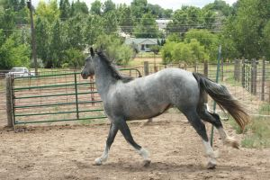 Blue Roan Stock 73 by tragedyseen