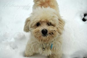 puppy by Lk-Photography