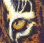 Eye of the Tiger by Skyeblu