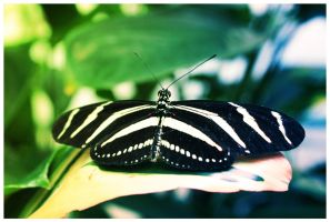 Stockphoto: The Butterfly 03 by JR-Dept