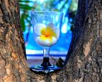 a glass of white bells by Litratobyberneserose