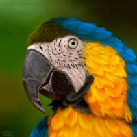 Colorful  feathers by Kelirth