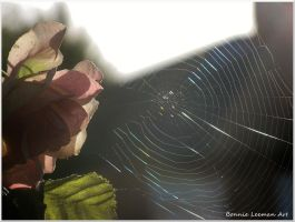 Rose and Spiderweb by Bonniemarie