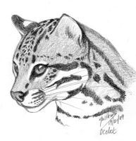 Ocelot Sketch by DragonsDust