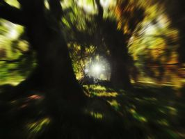 Forest_Test 02 by Andrescamilo1985