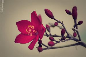 .. flower .. by 3lo0o