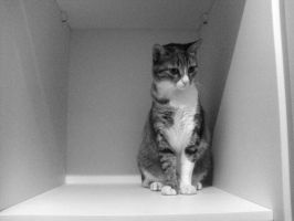 Wardrobe Series-Photogenic cat by Coffee-Mate