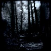 Black Forest by intao