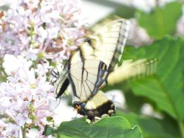 Flutter By Me by SilvaNaturePhotos