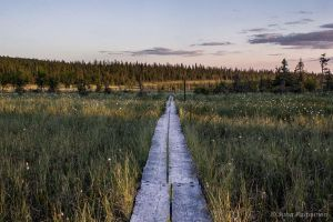 The Pathway by NatureRai