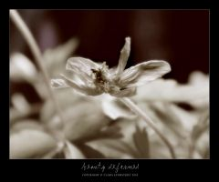 Beauty deformed I by lostgirl