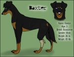 CC - Baxter Reference by German-Shepherd-Girl