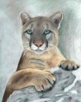 Cougar by xilovehorsesx
