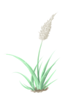 Plant Painting by Namyi
