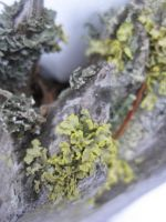Moss and Snow Close Up by r-a-i-n-y