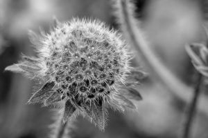 black and white plant by nicholls34