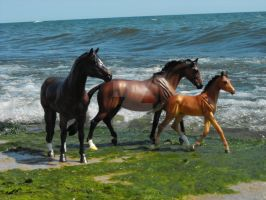 Lake Shore Family 3 by PurpleSunshineStable
