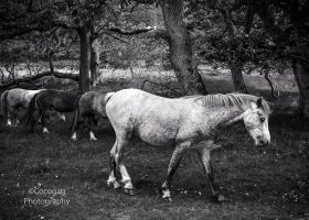 Aber Falls Pony by friartuck40