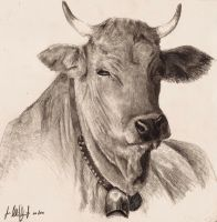 Cow study by grimdrifter