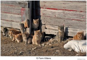 10 Farm Kittens by hunter1828
