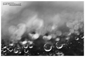 Dew Drop in Your Hair by jawg1982