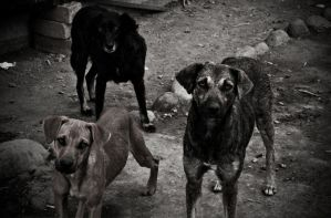 Dogs by aflores167