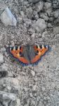 Butterfly 2 by Pabllo13