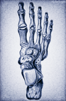 The Skeletal Foot by RicGrayDesign